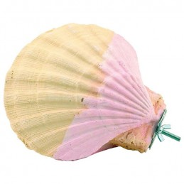 Perchoir coquillage - small