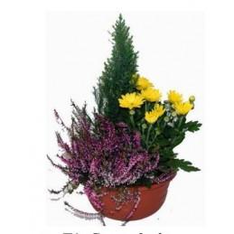 Coupe 3 plantes