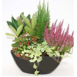 Coupe 5 plantes - hors gel