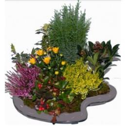 Grande palette grise 6 plantes